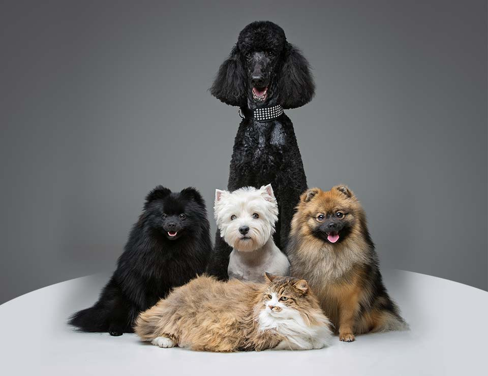 Best Pet Grooming in Dubai